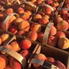 Peters Orchards and Market