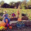 Clover Nook Farm