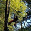 Johnson's Tree Service LLC