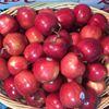Hudson River Fruit Distributors