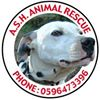 Ash Animal Rescue