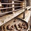 No to Kopi Luwak Coffee