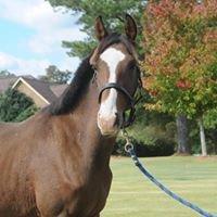 Hillock Dressage Horses