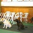 Positive Dog Training School