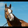 Widmer Equestrian Centre