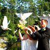 White Dove Release by Kim Hinterschied