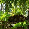 Rainforest Weddings