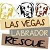 Las Vegas Labrador Rescue