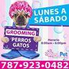 Posh Pet Boutique & Grooming