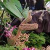 Garden Island Orchid Society