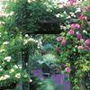 The Healing Garden Wellness Studio