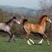 Cullenagh Stables & Farm