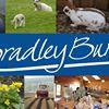 Bradley Burn Caravan Park