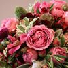 Stems Flower Gallery