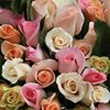 Sussex Roses
