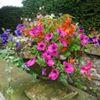 Thornbridge Hall & Gardens - RHS Partner Garden