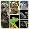 Joe's Owl Encounters & Mobile Zoo