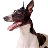 Castledon Greyhound Rescue