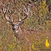 Oak Creek Whitetail Ranch