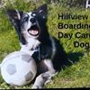 Hillview Home Boarding and training for Dogs