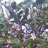 Lemon Tree Herbs