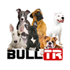 The Bull Terrier Club