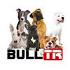 The Bull Terrier Club