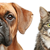 Pippa's Pet Care