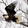 Berkshire Eagle