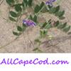 All Cape Cod . com