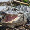 Everglades Day Safari - Fort Lauderdale