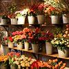 Pompon Bloemen & Flowers