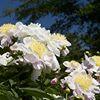 Barton Arboretum and Nature Preserve of Medford Leas