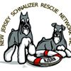 New Jersey Schnauzer Rescue Network
