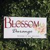 BLOSSOM Flower Shop in Durango Colorado