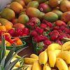 University of Miami Farmers Market