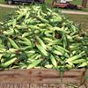 Nienaber's Farm Market