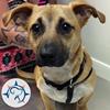 Quinebaug Valley Veterinary Hospital, LLC
