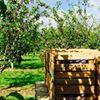 Dawson's Orchards, Inc.