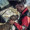 Glasgow Dog Trainer and Behaviour Consultant