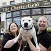 The Chesterfield Pet Friendly B&B Blackpool