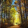 Pathways to Peace Yoga & Healing