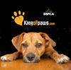 Dublin SPCA Dog Training with Kingofpaws thumb