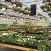 Maryland Flower & Foliage Company