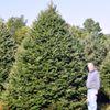 Greig Christmas Tree Farm