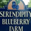 Serendipity Blueberry Farm