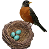 The Robin's Nest~ A Metaphysical Community, In All Ways, for Always!