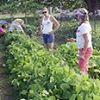 Kekaha Community Garden