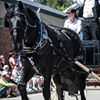 Kootenay Horse & Carriage