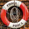Phoca Waddentochten Vlieland